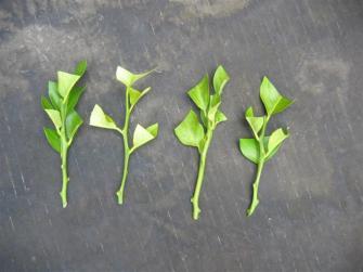Le bouturage : Une façon rapide et économique pour multiplier les plantes de votre jardin