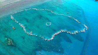 La reprise de la vie nautique sur l'île de la Réunion