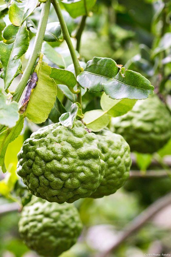 le-combava-un-agrume-peu-commun-a-tahiti