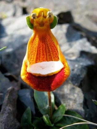 orchidée-rare-des-orchidées-qui-imitent-des-etres-vivants