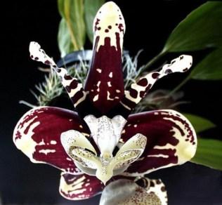 orchidée-rare-orchidées-uniques-sauvages-jolie-orchidée