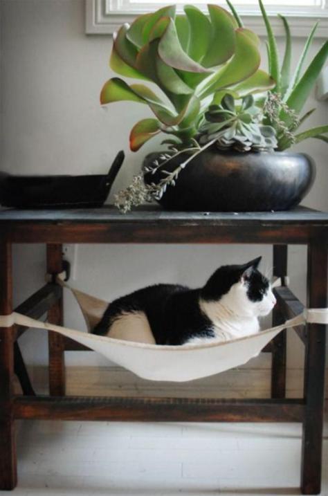 plantes-grasses-dintérieur-joli-arrangement-avec-des-plantes-succulentes