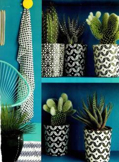 plantes-grasses-dintérieur-mur-vert-et-pots-cactus-formidables