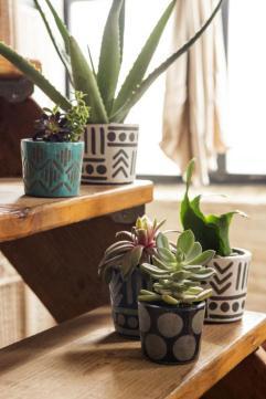plantes-grasses-dintérieur-réaliser-une-déco-verte-sur-échelle