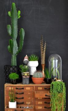 plantes-grasses-dintérieur-utiliser-de-vieux-lmeubles-pour-les-plantes