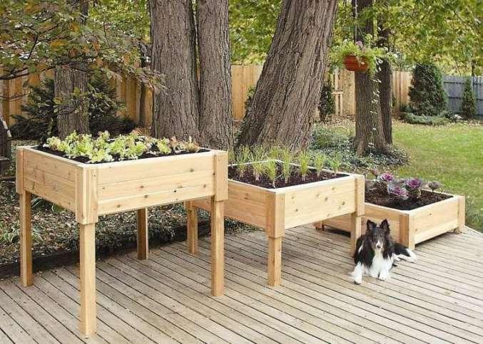 jardin-en-hauteur-chien