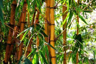 6 plantes qui attirent les énergies positives