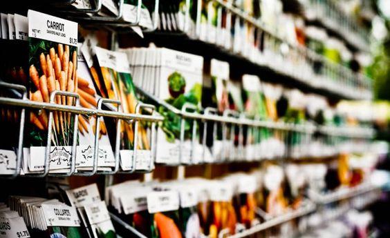 Jardinage – Comment choisir des graines de qualité ?