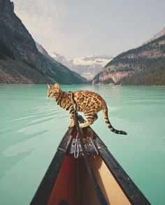 Suki le chat qui voyage 04