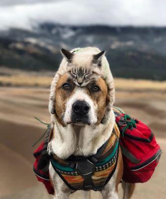 Baloo et Henry, des voyageurs hors du commun