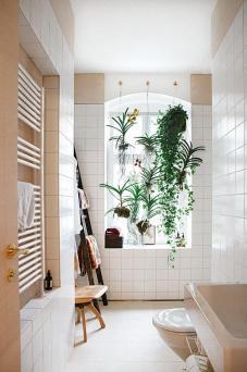 des-plantes-vertes-suspendues-au-plafond (2)