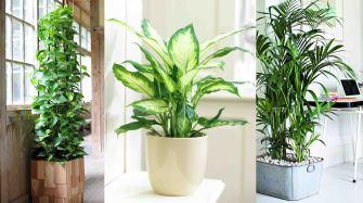 Les plantes dépolluantes pour assainir l'air de votre maison