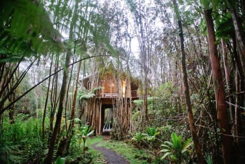 Dreamy Tropical Tree House 22