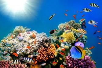 Hawaii va interdire les crèmes solaires nocives pour la faune sous marine