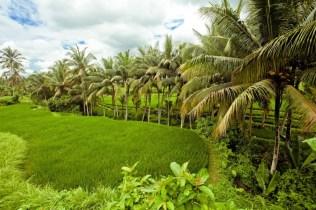 chalet écologique bambou rizières Ubud 04