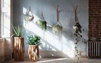 The Green Range, les nouvelles jardinières d'intérieur en bois cintré par Tom Raffield