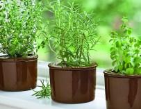 Comment faire pousser des herbes à l'intérieur ?