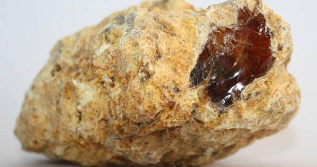 L'ambre gris des baleines, une matière première précieuse utilisée dans la parfumerie de luxe