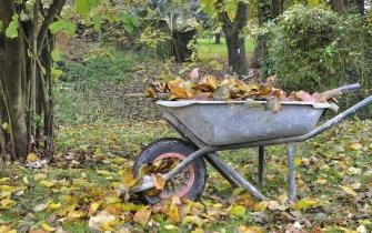 Comment faire du terreaux de feuilles ?