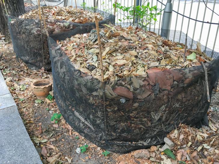 leaf-mold