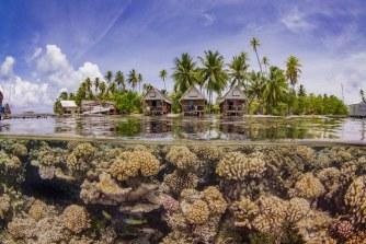 Comment les crèmes solaires tuent nos récifs coralliens ?