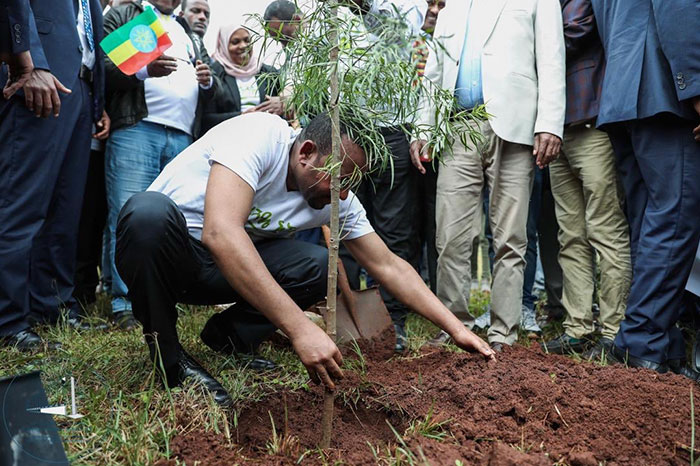 350-million-trees-planted-record-green-legacy-ethiopia-5d41550d731d6__700