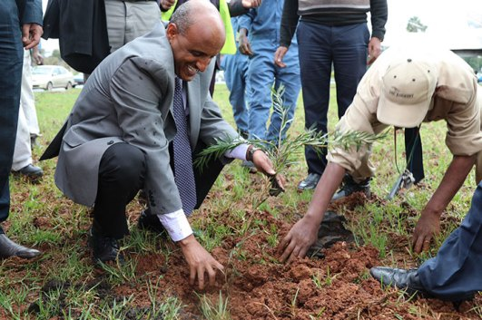 350-million-trees-planted-record-green-legacy-ethiopia-5d415871cd371__700