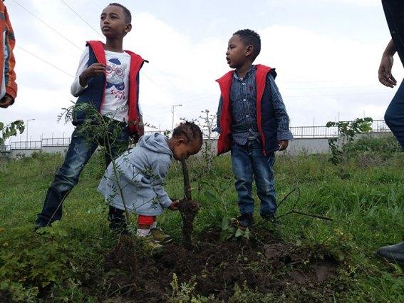 350-million-trees-planted-record-green-legacy-ethiopia-5d415e31a1754__700