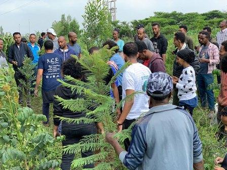 350-million-trees-planted-record-green-legacy-ethiopia-5d4161fa17ef8__700