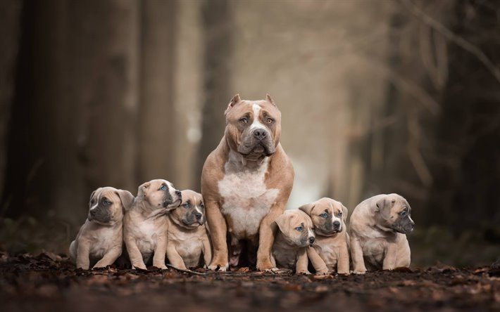 thumb2-pitbull-terrier-family-brown-puppies-big-dog-american-pit-bull-terrier