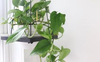 DIY : comment suspendre vos plantes au plafond ?