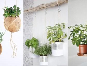 Plantes suspendues : des idées pour un coin nature
