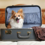 How to Successfully Move Your Pet to a New Home