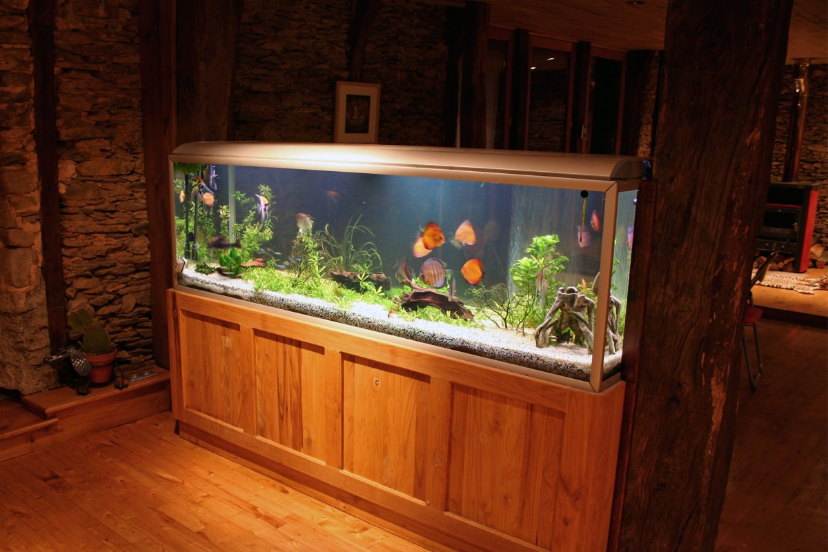 move your aquarium