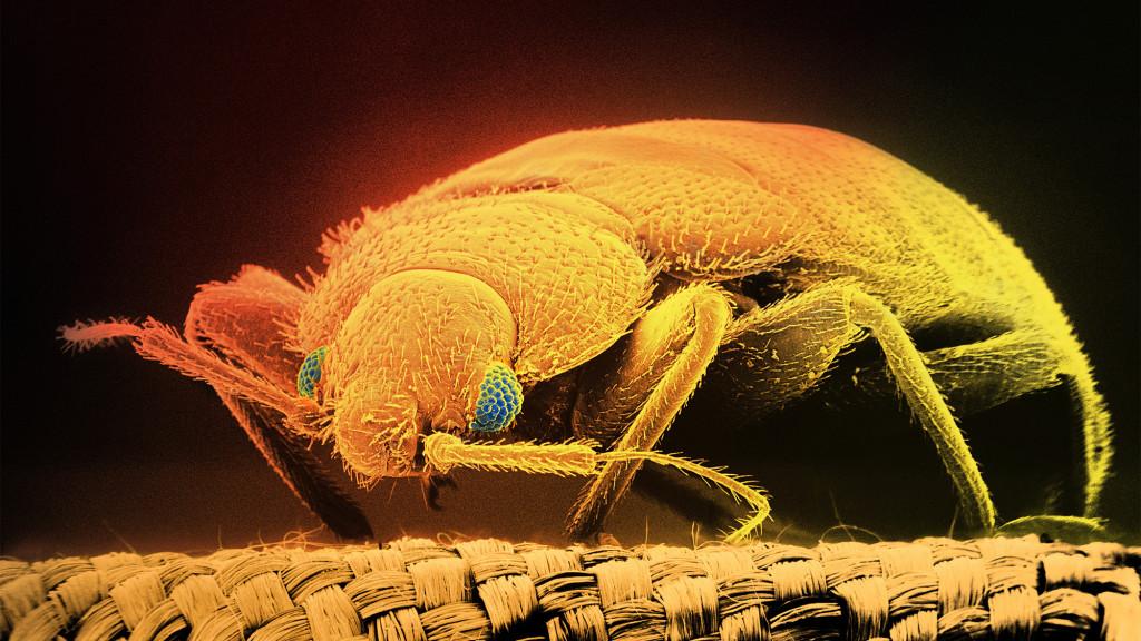 How Do I Reduce Home Pests