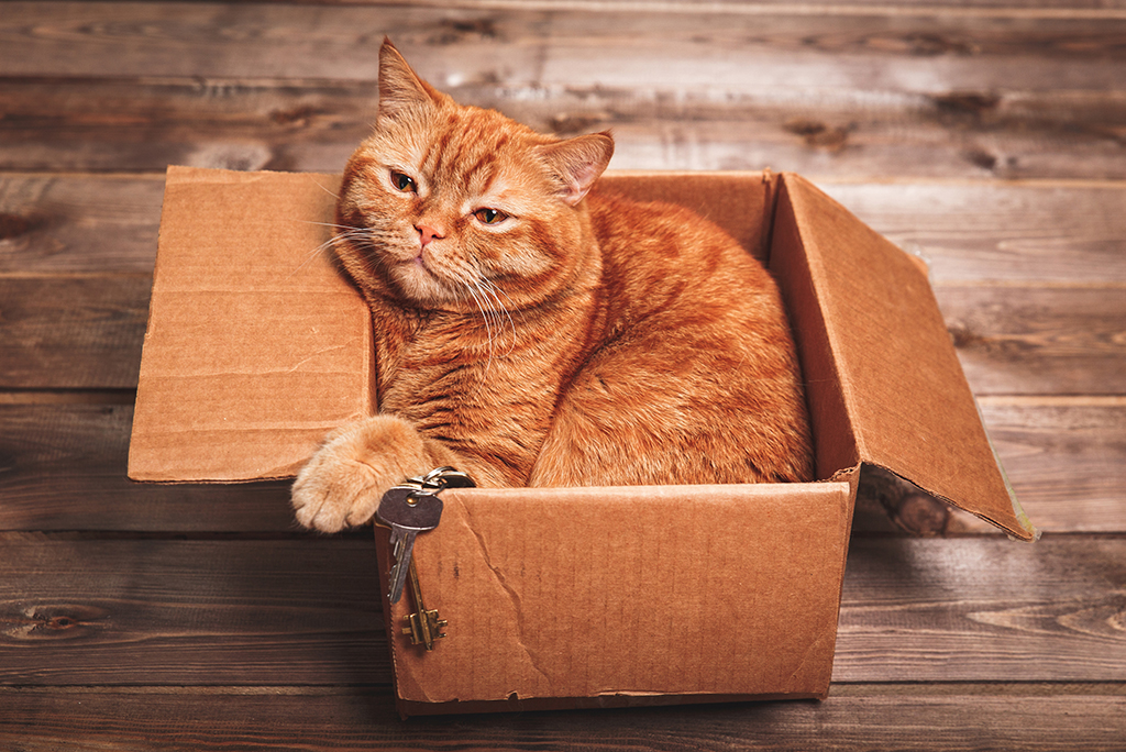Moving with a Cat: Tips for Making it Less Stressful
