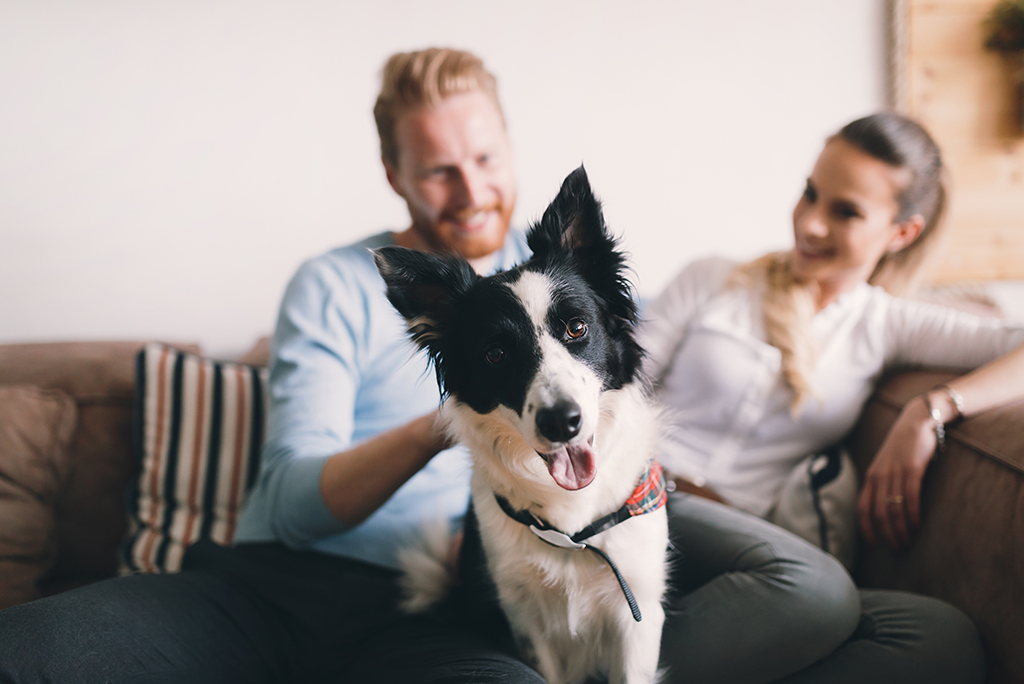 Moving with Pets: How to Help Your Dog Adjust to Your New Home