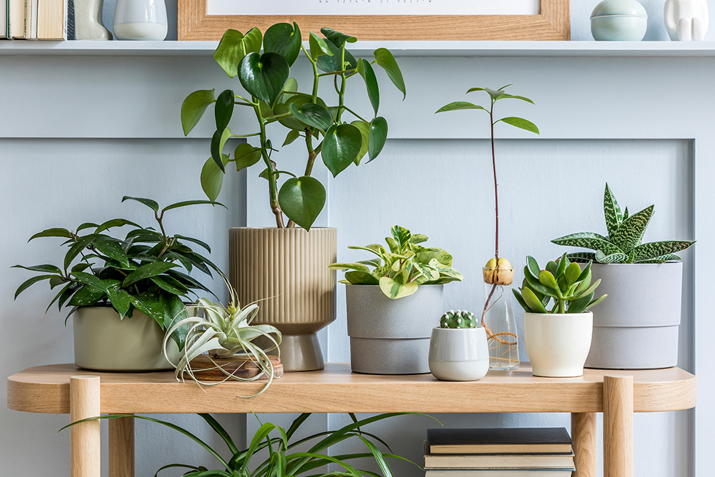 10 Low Maintenance Plants For Your Home Moving Com