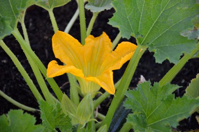 Garden 05