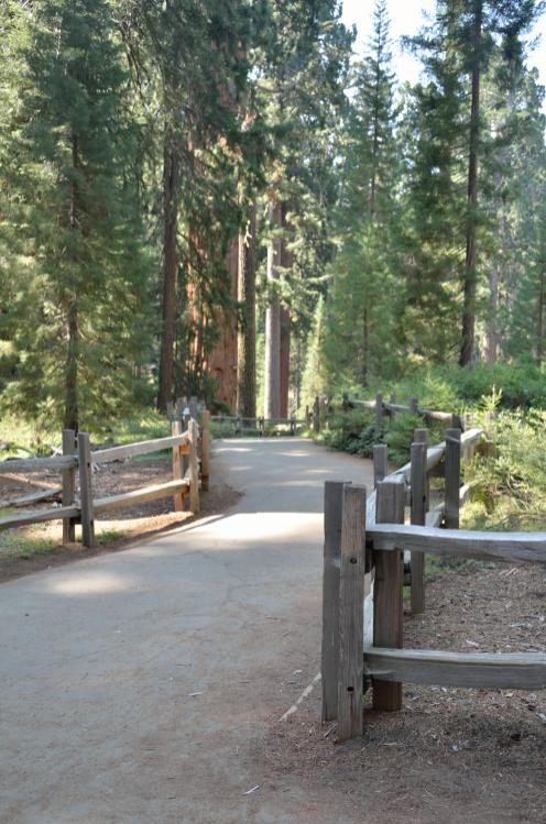 The main trail is an easy loop ... very stroller friendly.