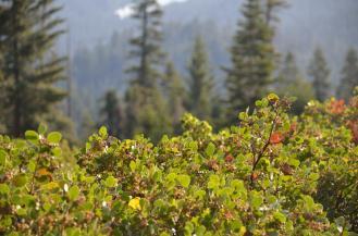 Sequoia National Park 06