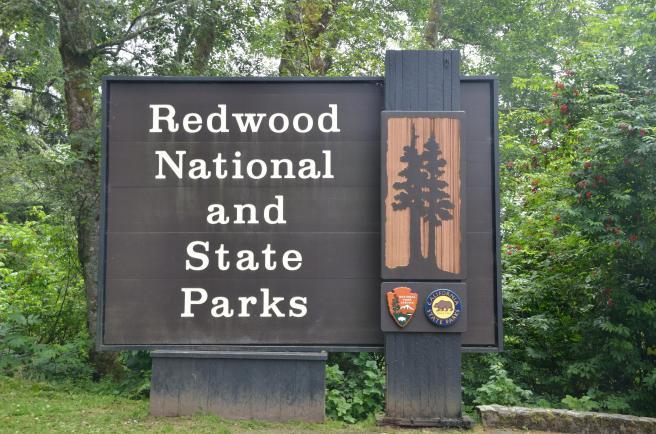Redwood National Park 00