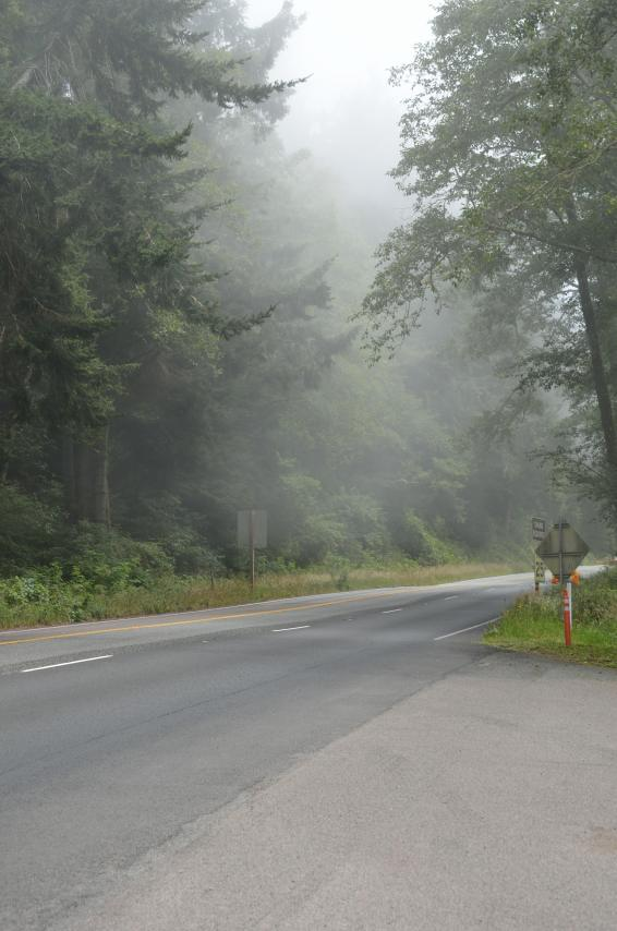 We had fog everywhere we went this day!