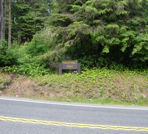 """I don't know why there are signs memoralizing various """"XXX Family Grove"""" redwoods ... but there are several of these signs on the highway."""