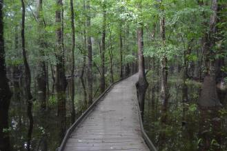 From Congaree National Park's Facebook page.