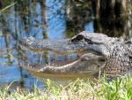 Everglades NP 08