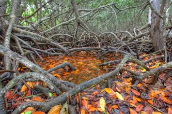From the Everglades NP Facebook page.