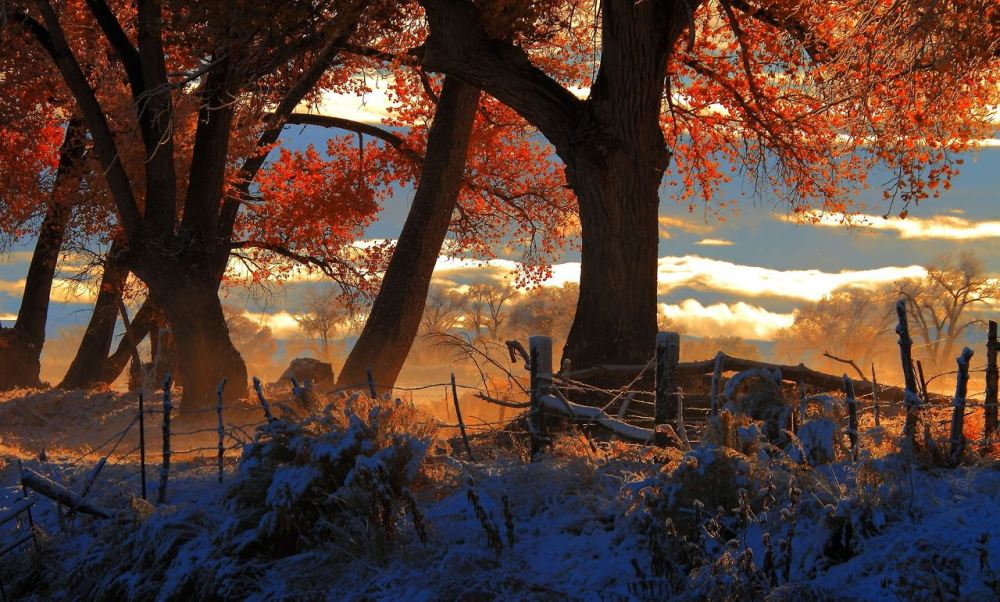 This magical scene was shot near the Carson River north of Fallon, Nevada. Tweeted by the US Department of the Interior, 11/22/13.