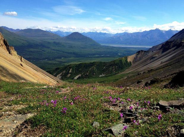 View from the top of the Skookum Volcano trail off the Nabesna Road. From the Park's Facebook page.