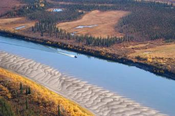 In late August and early September, visitors to Kobuk Valley National Park in Alaska can watch caribou in striking autumn pelage as they swim across the river. Huge antlers and white ruffs mark the bulls. Photograph by Nick Jans/Photo Library